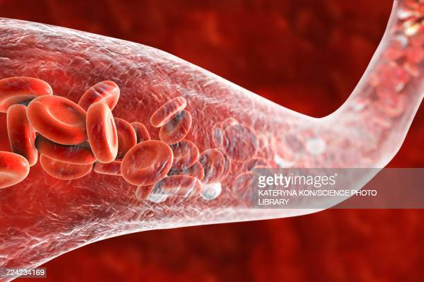 blood vessel with blood cells, illustration - human blood stock illustrations, clip art, cartoons, & icons