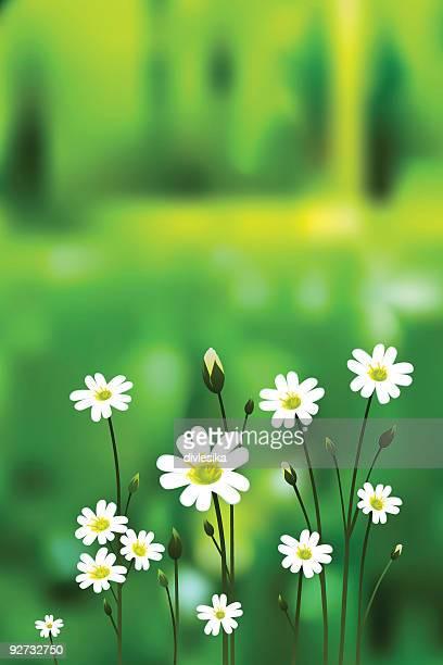 ilustraciones, imágenes clip art, dibujos animados e iconos de stock de blossoming bosque - planta de manzanilla