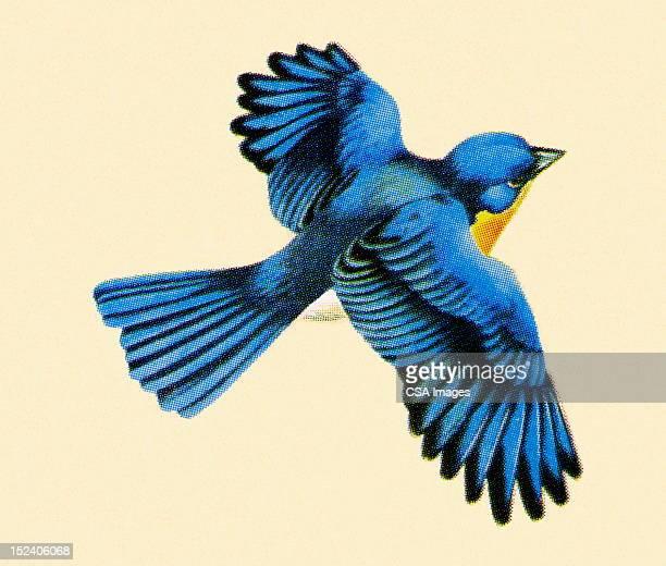 ilustraciones, imágenes clip art, dibujos animados e iconos de stock de blue bird volando - alas desplegadas