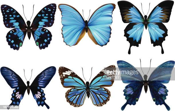 blue butterfly's-vector illustration - animal wing stock illustrations