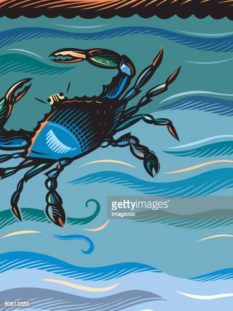 a blue crab in the water - blue crab stock illustrations