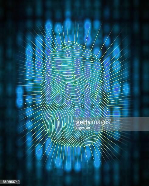 blue fingerprint - natural pattern stock illustrations