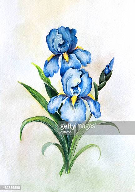 Blue Irises Watercolor painting