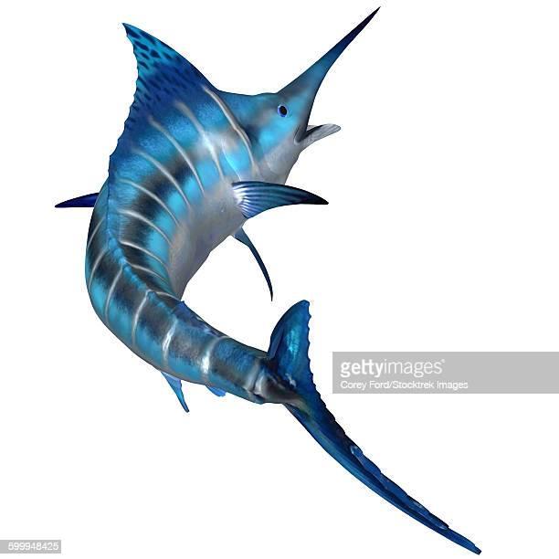ilustraciones, imágenes clip art, dibujos animados e iconos de stock de blue marlin - paleobiología