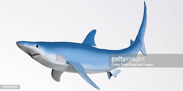 ilustrações, clipart, desenhos animados e ícones de blue shark profile - organismo aquático