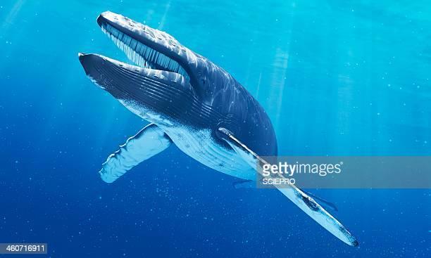 blue whale, artwork - クジラ点のイラスト素材/クリップアート素材/マンガ素材/アイコン素材