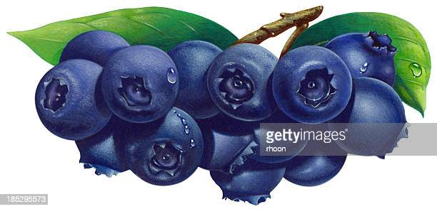 blueberries - blueberry stock illustrations, clip art, cartoons, & icons