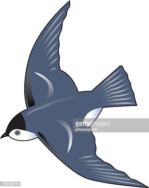 bluebird - swift river stock illustrations
