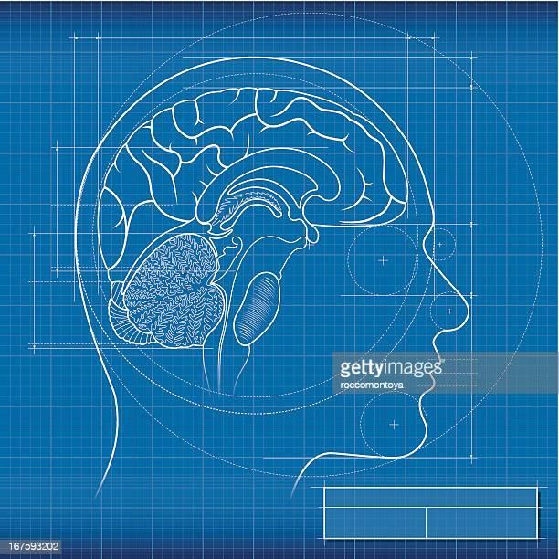 blueprint, brain - medical diagram stock illustrations, clip art, cartoons, & icons