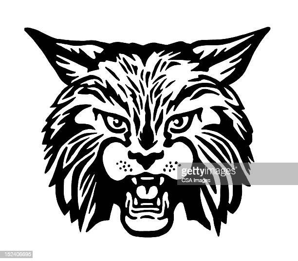 bobcat - mascot stock illustrations