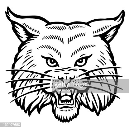 Bobcat stock illustration - Getty Images