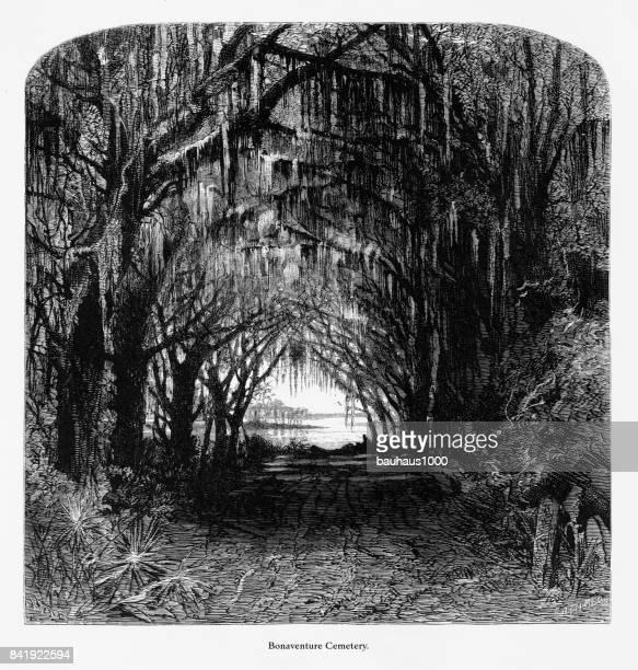 ilustraciones, imágenes clip art, dibujos animados e iconos de stock de cementerio de bonaventure, savannah, georgia, estados unidos, grabado victoriano americano, 1872 - savannah