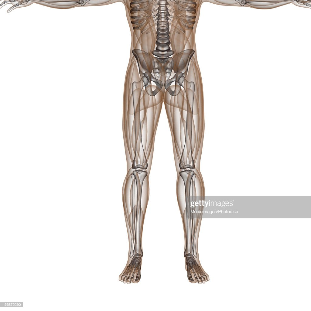 Bone Structure Of A Human Body Stock Illustration Getty Images