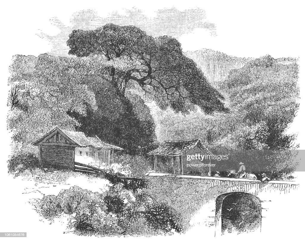 Paso de frontera y aduana en La Garita, Costa Rica (siglo XIX) : Ilustración de stock