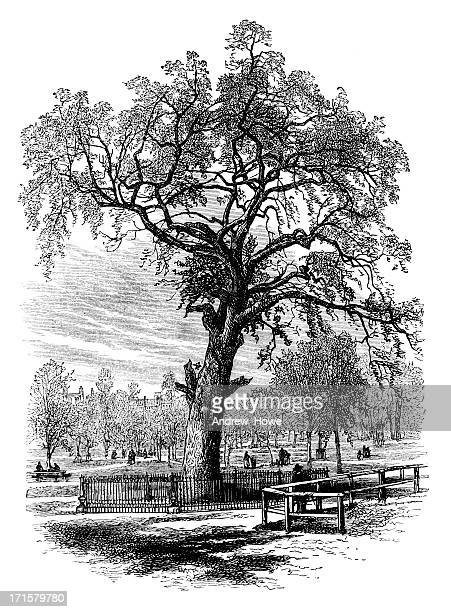 boston common engraving - boston common stock illustrations