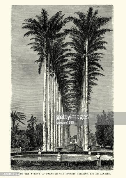 Botanic Gardens, Rio De Janeiro, Brazil 19th Century