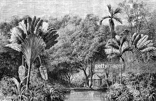 botanical garden in martinique - french overseas territory stock illustrations