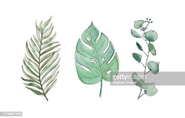 植物熱帯の葉 - オリジナルの水彩画 - ユーカリの葉点のイラスト素材/クリップアート素材/マンガ素材/アイコン素材