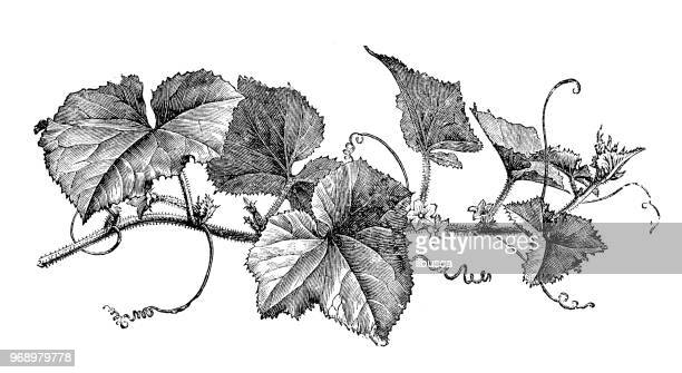 Black And White Botanical Prints Stock Photos And Pictures