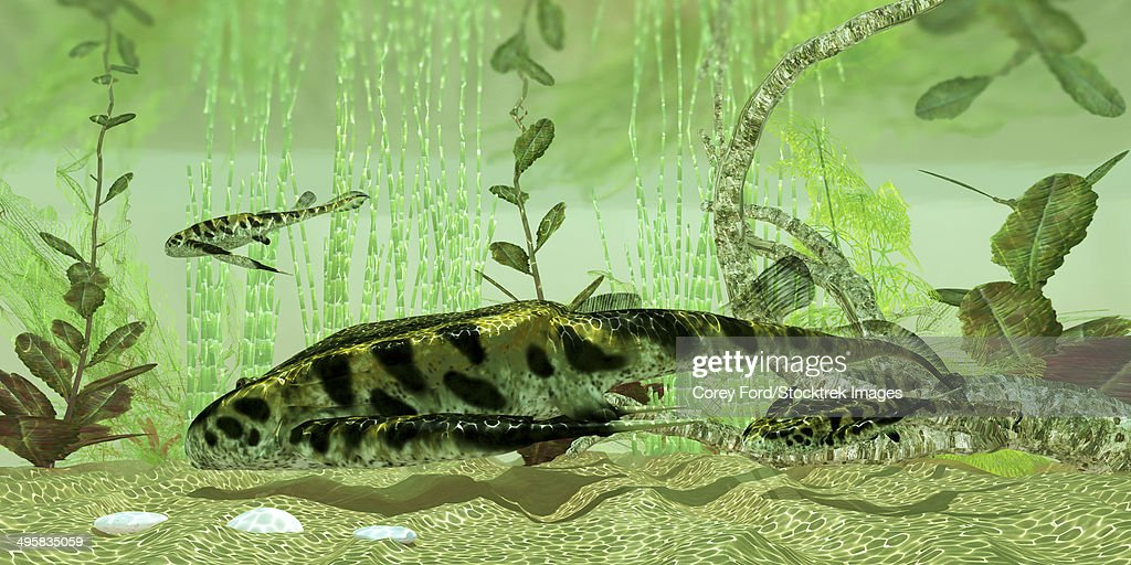 Bothriolepis, a freshwater bottom feeder found in rivers and lakes in the Devonian Period. : stock illustration