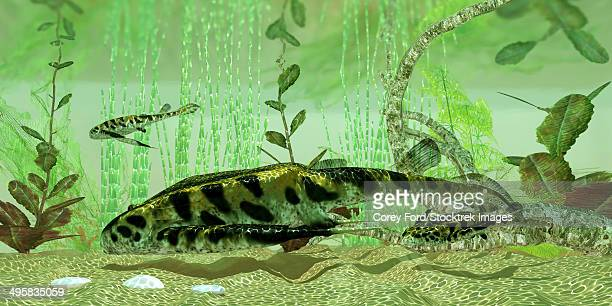 Bothriolepis, a freshwater bottom feeder found in rivers and lakes in the Devonian Period.