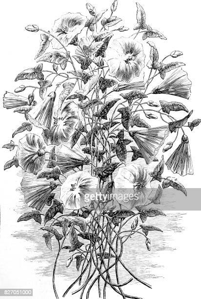 a bouquet of wild convolvulus on white - plant attribute stock illustrations, clip art, cartoons, & icons