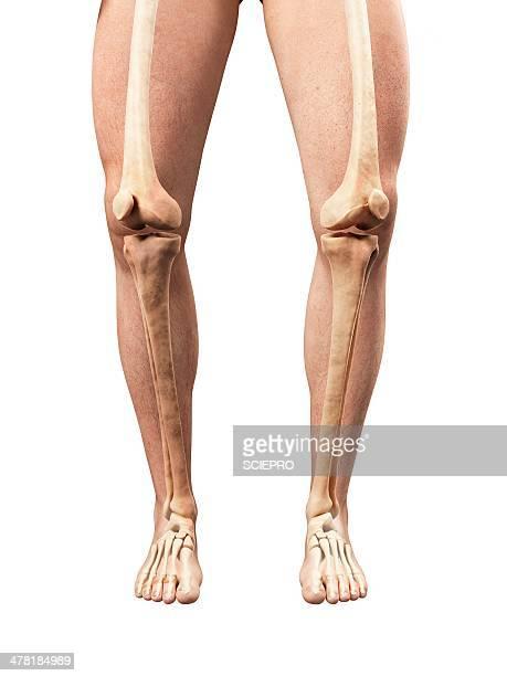 bowed legs, artwork - human leg stock illustrations