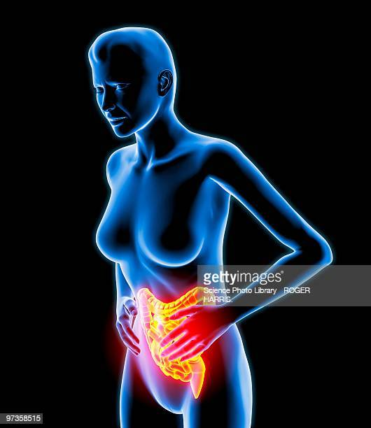 bowel pain, artwork - anatomical model stock illustrations, clip art, cartoons, & icons