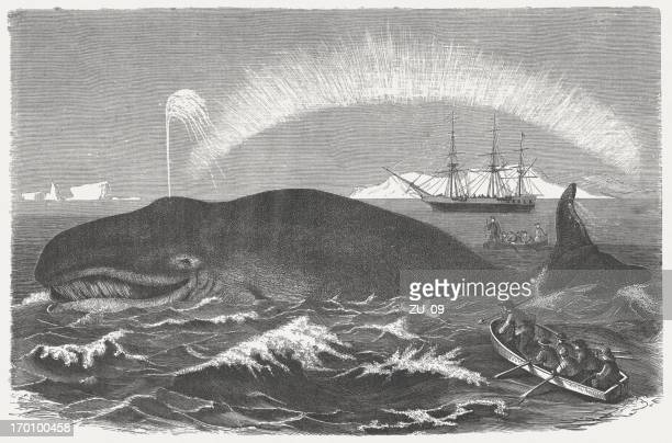 bowhead whale is hunted, wood engraving, published in 1875 - aurora borealis stock illustrations