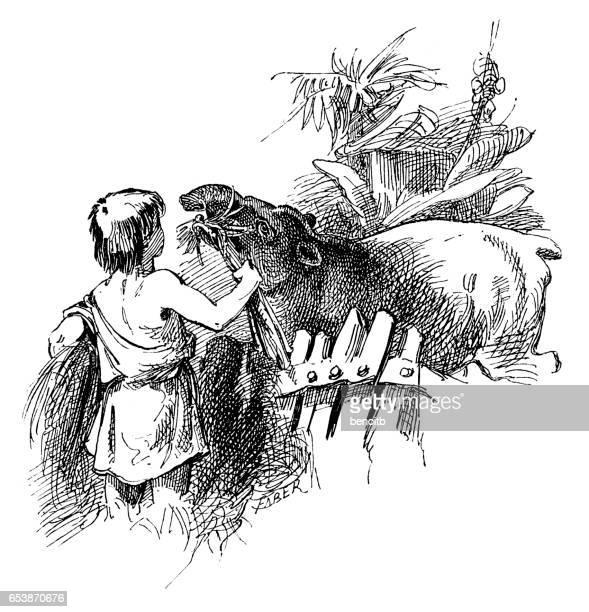 Boy feeding Tapir