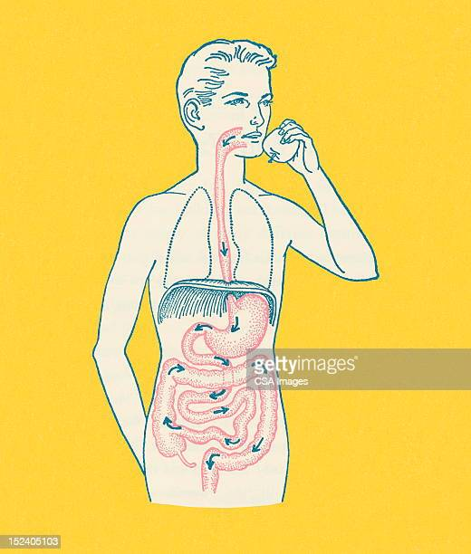 stockillustraties, clipart, cartoons en iconen met boy's gastrointestinal tract - food and drink