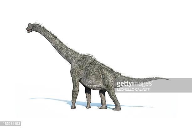 ilustraciones, imágenes clip art, dibujos animados e iconos de stock de brachiosaurus dinosaur, artwork - jurásico