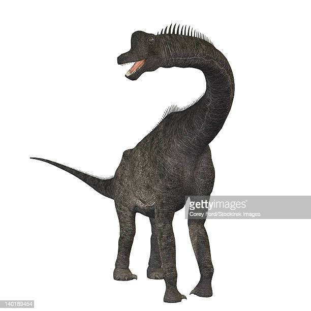 ilustraciones, imágenes clip art, dibujos animados e iconos de stock de brachiosaurus dinosaur. - triásico