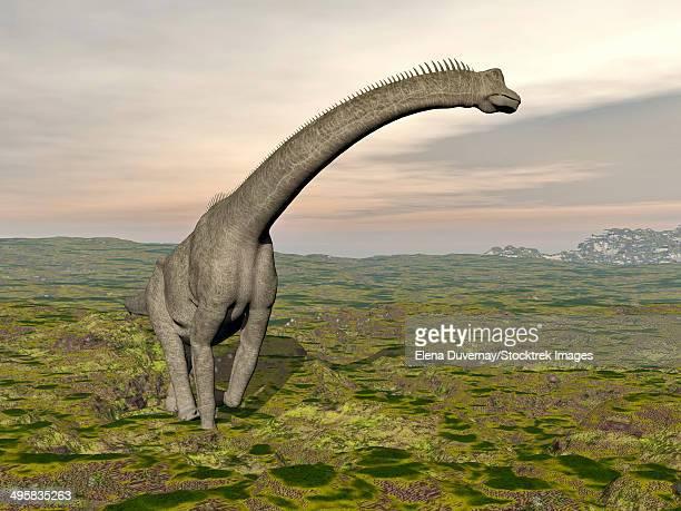 Brachiosaurus dinosaur walking in grassy landscape.