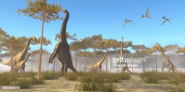ilustraciones, imágenes clip art, dibujos animados e iconos de stock de a brachiosaurus herd grazing on treetops. - triásico