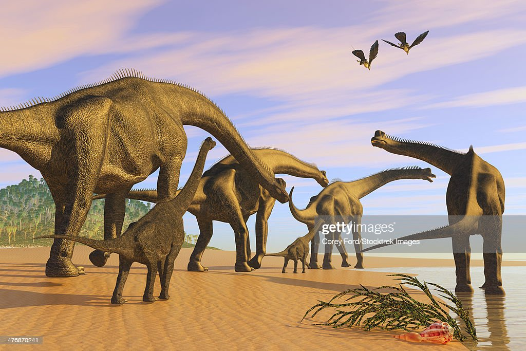 A Brachiosaurus herd walks down a wet sandy beach in search of vegetation to eat. : stock illustration