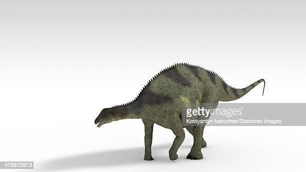 Brachytrachelopan dinosaur, white background.