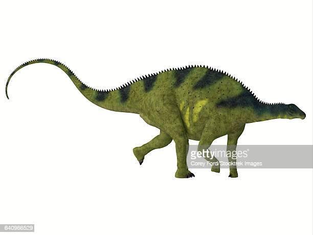brachytrachelopan dinosaur, white background. - animal body stock illustrations, clip art, cartoons, & icons