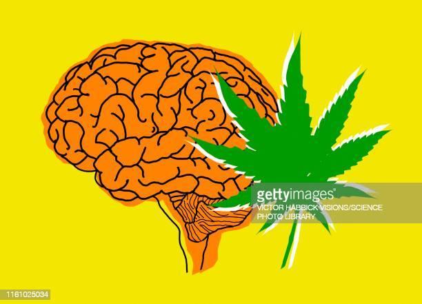brain and cannabis, illustration - victor habbick stock illustrations