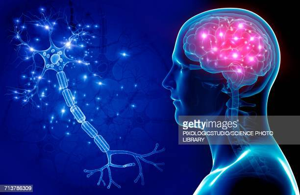 brain and nerve cell, illustration - human nervous system stock illustrations