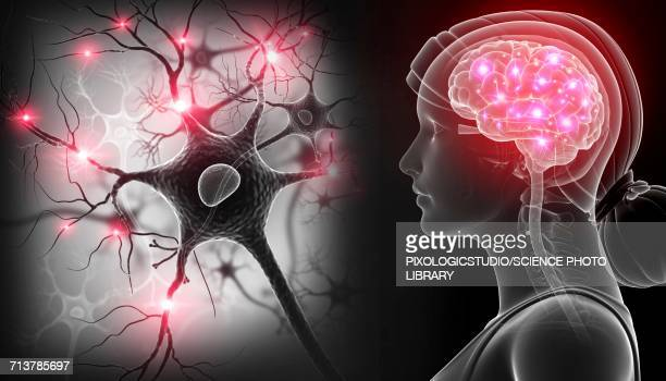 ilustrações de stock, clip art, desenhos animados e ícones de brain and nerve cells, illustration - sistema nervoso central