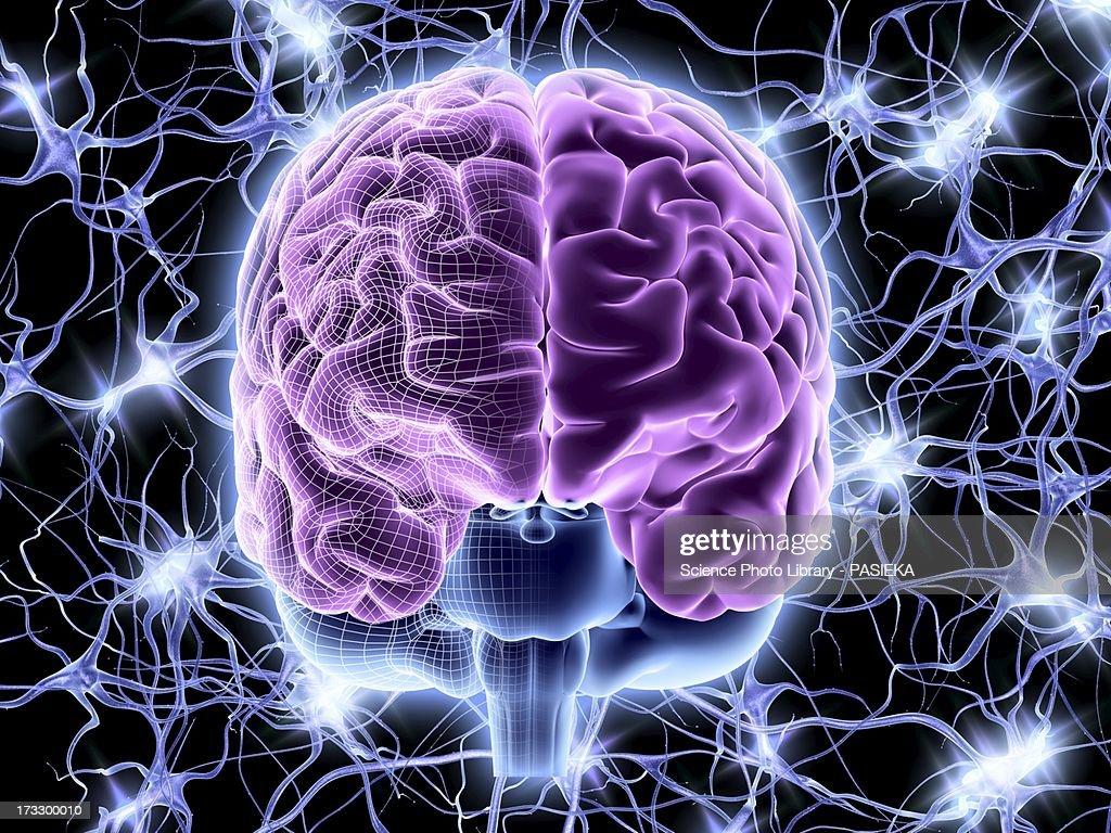 Brain and nerve cells, neural network : Stock Illustration