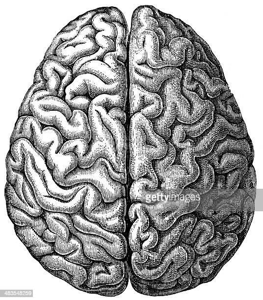 brain - engraving stock illustrations, clip art, cartoons, & icons