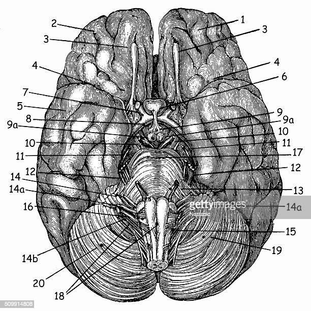 brain - neurosurgery stock illustrations, clip art, cartoons, & icons