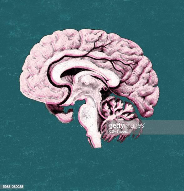 brain - spooky stock illustrations