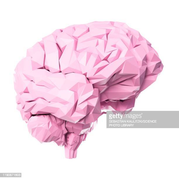 brain, illustration - transparent stock illustrations
