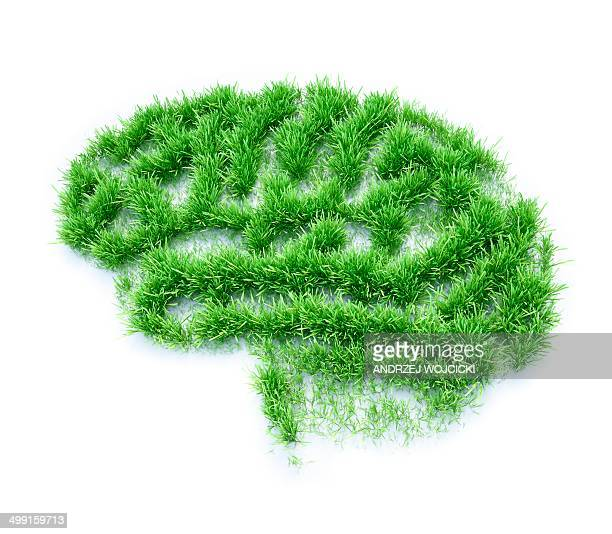 brain made from grass, artwork - growth stock illustrations