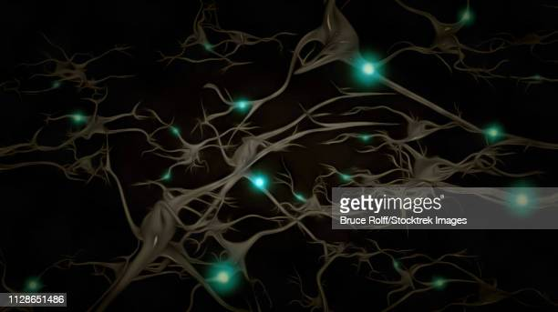 ilustraciones, imágenes clip art, dibujos animados e iconos de stock de brain neurons - cerebral nuclei