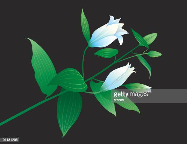 branch - easter lily stock illustrations