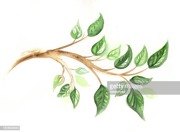 branch with leaves